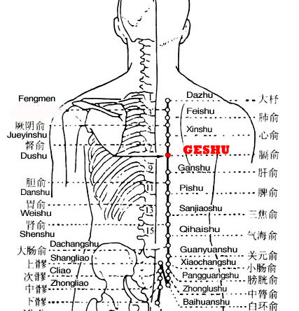 Geshu is the place where the Qi of the diaphragm is infused into the back.