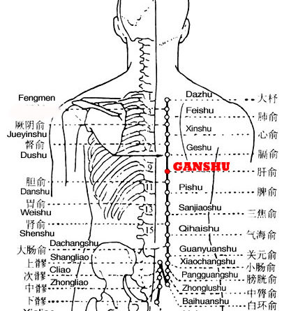 Ganshu is the place where the Qi of the liver is infused into the back.