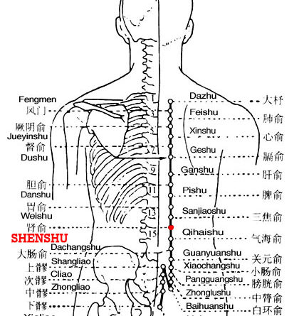 Shenshu is the place where the Qi of the kidney infuses into the back.