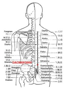 Dachangshu is the place where the Qi of the large intestine infuses into the back.