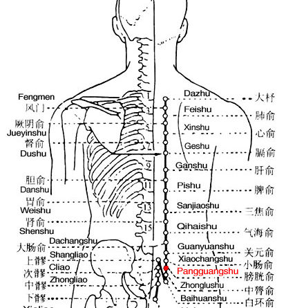 Pangguangshu is the place where the Qi of the bladder infuses into the back.