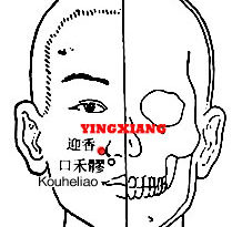 Yingxiang LI20 lies on either side of the nose and is used to treat disorder of nose, to improve the sense of smell and enable the nose to sense fragrance.