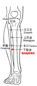Xiajuxu ST39 lies 9 cun below Dubi(ST35), one finger width lateral to the anterior crest of the tibia, on the large void is formed between tibia and fibula