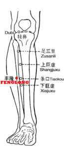 Fenglong lies 8 cun above the external malleolus, two finger widths lateral to the anterior crest of the tibia.