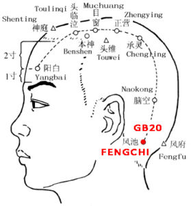 Fengchi is below the occipital bone in a pool loke depression. It is an important point in eliminating the pathogenic wind.