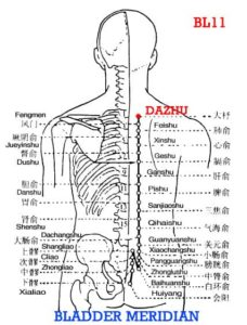 The first thoracic vertebra is bigger, the spinous process is like a shuttle, and Dazhu is lateral to it.