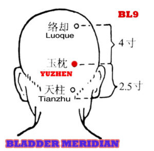 Yuzhen BL9 lies 2.5 cun directly above the midpoint of the posterior hairline and 1.3 cun lateral to the midline, in the depression on the level of the upper border of the external occipital protuberance.