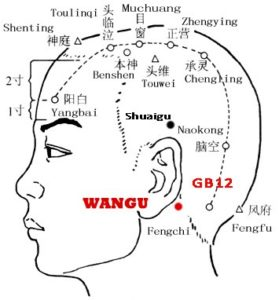 Wangu GB12 is on the lower margin, in depression just posterior and inferior to mastoid process of the temporal bone, behind the ear.