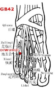 Diwuhui GB42 lies between the 4th and 5th metatarsal bones, on the medial side of the tendon of m. extensor digitorum longus (branch to little toe).