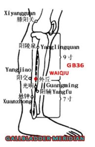 Waiqiu is above the lateral mallelous and local muscle forms a mound- like prominence.