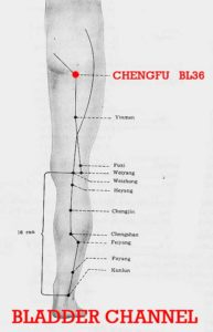 Chengfu is on the upper part of the femur at the midpoint of the gluteo-femoral crease, its function is to enable the lower limbs to sustain the body weight.