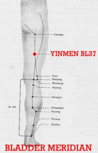 The local muscle of the point is thick, and yinmen is a door where the Qi of the bladder meridian passes through.