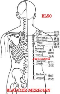 Weicang, BL50 is at the level of Weishu (Bl21). The stomach receives food, just like a storehouse.