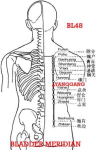 The gall bladder pertains to Yang.   Yanggang BL48 is at the level of Danshu (BL19) and is important in treating gallbladder disease.