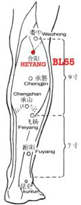 Heyang, BL55 lies 2 cun directly below Weizhong (BL40), between the medial and lateral heads of gastrocnemius, on the line joining BL40 and BL57.