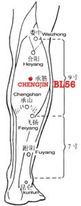 Chengjin, BL56 is on the gastrocnemius muscle, which is an important leg muscle helping to sustain the upper part of the body.