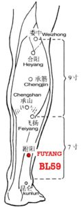 "Yang here means ""exterior and superior"". Fuyang is on the superior aspect of the tarsus and on the lateral aspect of the leg."