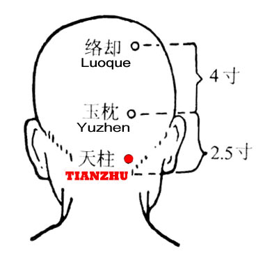 "Heaven here means ""upper"". The cervical spine was called ""zhugu"" (pillar bone} in ancient times and tianzhu is lateral to it."