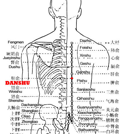 Danshu is the place where the Qi of the gallbladder is infused into the back.