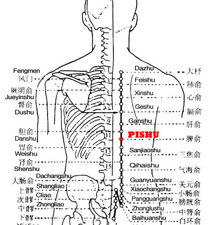 Pishu is the place where the Qi of the spleen infuses into the back.