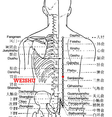 Weishu is the place where the Qi of the stomach infuses into the back.