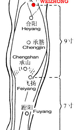 Weizhong is at the midpoint of the transverse crease of the popliteal fossa.