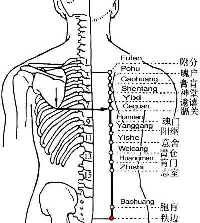 The back shu point of the bladder meridian are arranged in order. Zhibian, BL54 is at the lowest among them.