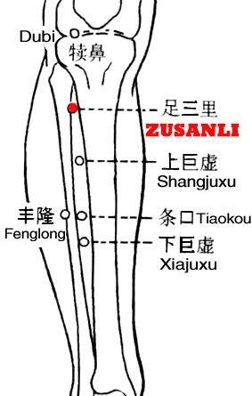 Zusanli-ST36